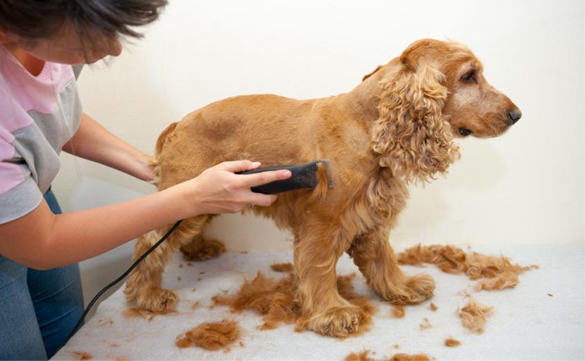 Зачем стригут собак